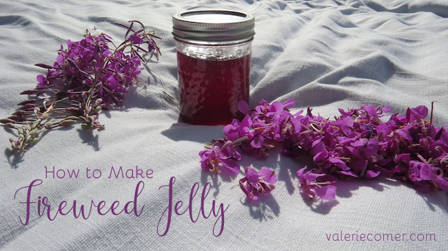 DIY fireweed jelly, homemade fireweed jelly, how to make fireweed jelly