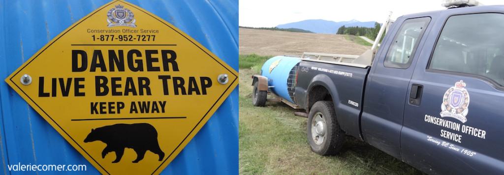 bear trap, live bear trap, conservation officer
