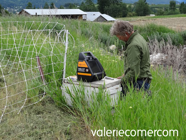 Solar fencer, bee yard, electric mesh fence, electric netting