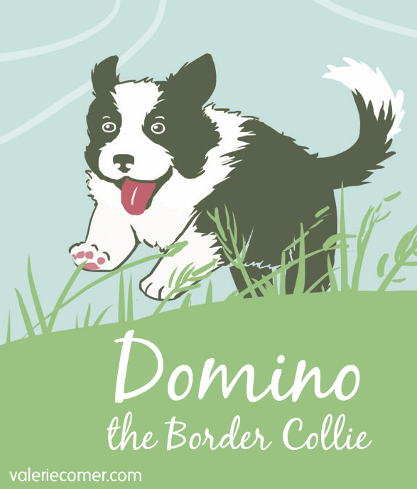 Domino the border collie, border collie, raspberries and vinegar, valerie comer, farm fresh romance, farm lit