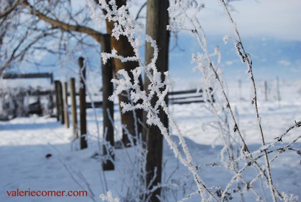 hoar frost4