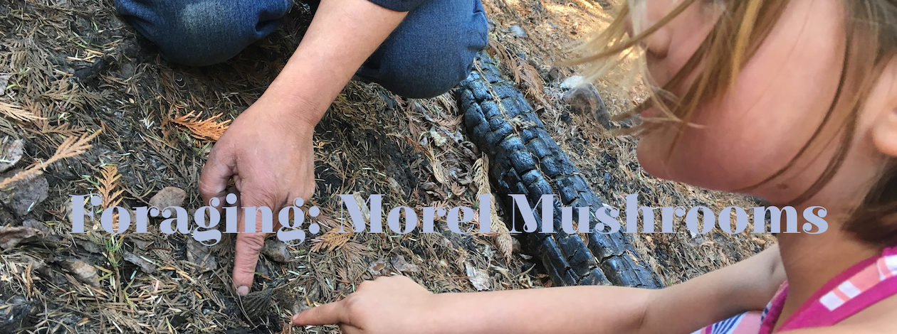 morel, forage,
